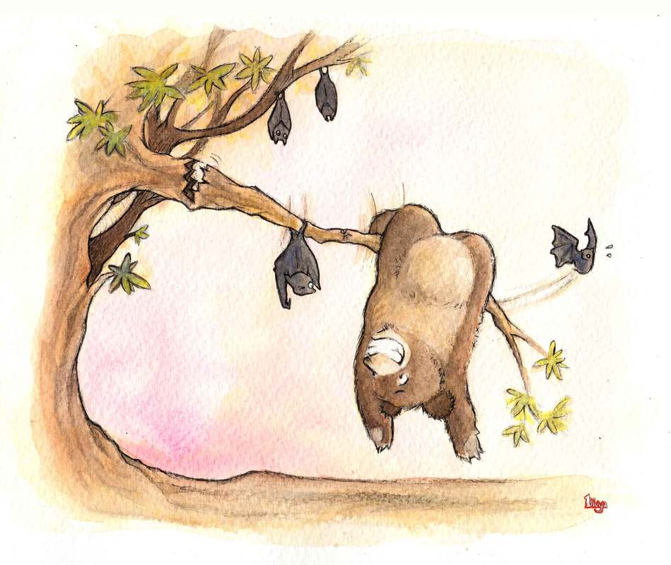 A Bear tries to hang upside down like a Bat but the branch starts breaking. Fun watercolour animal illustration by Divya George.
