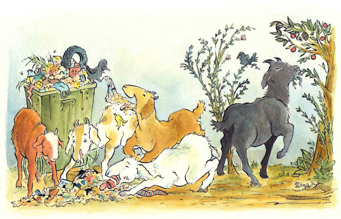 One goat eats healthy fruits while the others enjoy  junk from a garbage can. Watercolour illustration by Divya George.