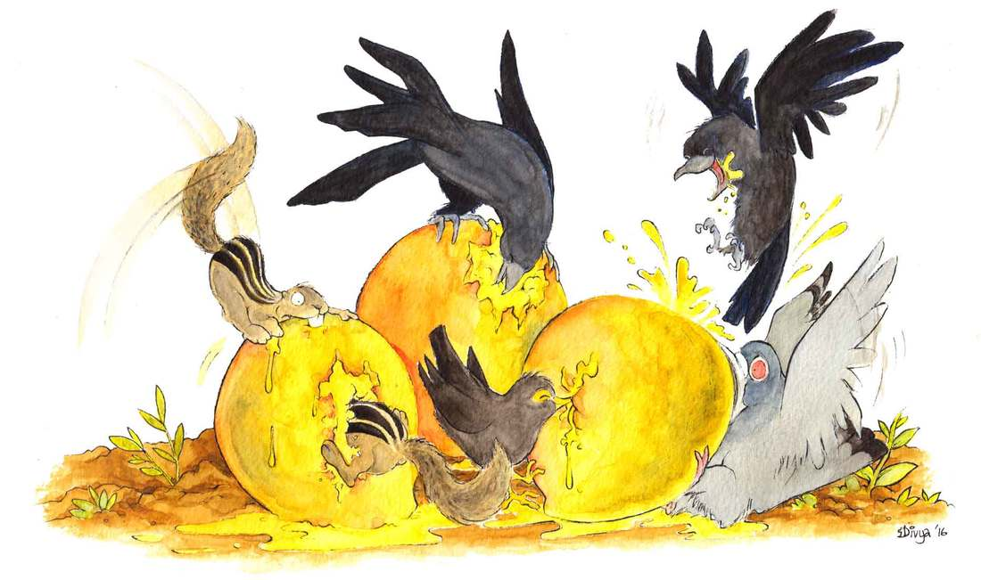 Ccrows, mynahs, squirrels and a pigeon enjoy some mangoes. The pigeon is biting off more than it can chew. Fun animal and bird illustration by Divya George.