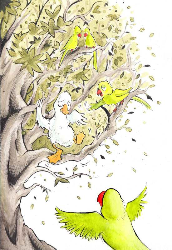 A Parrot teaches a Duck how to climb a tree. Fun watercolour animal illustration by Divya George.
