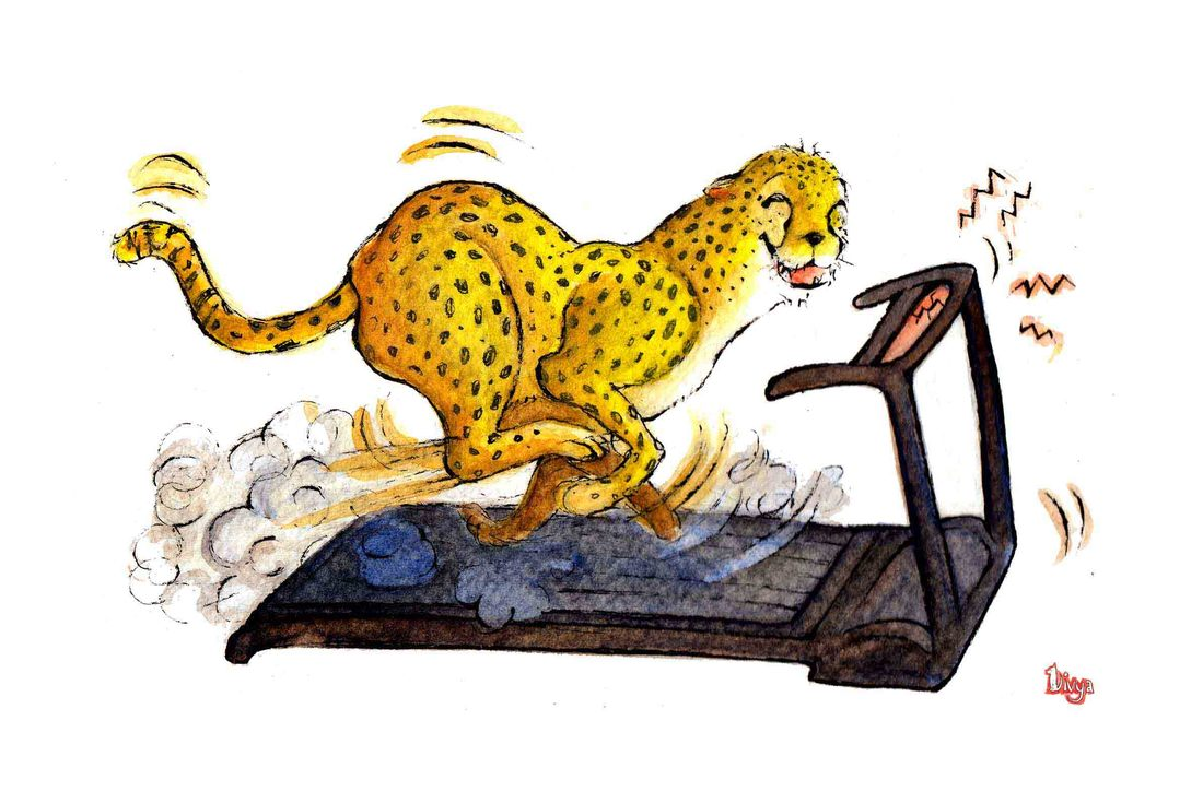 Cheetah exercising on a treadmill. Fun watercolour animal illustration by Divya George.