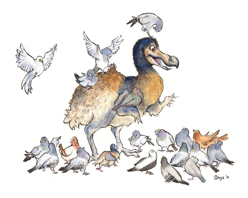 A group of pigeons meet a dodo, their long-lost relative. Fun bird illustration by Divya George.