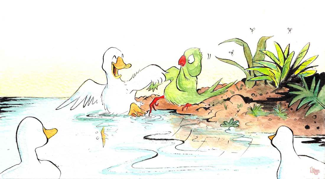 A Duck tries to teach a Parrot how to swim. Fun Watercolour Animal Illustration by Divya George.