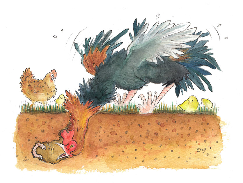 A Rooster tries to eat a Worm edged at the end of a hole in the ground while a hen and chick look on. Watercolour illustration by Divya George.